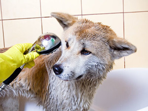 how-to-bathe-your-dog