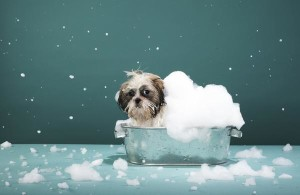 wet your dog with shampoo