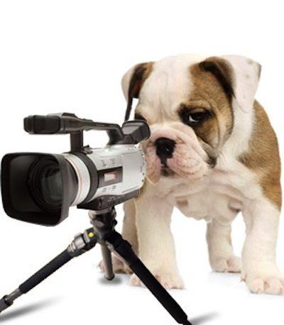 Puppy Camera